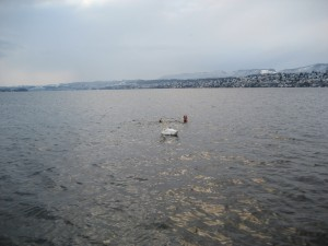 Zurich Lake with Swan encounter, Jan. 2nd, 2010