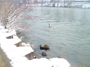winter swimming in the Neckar