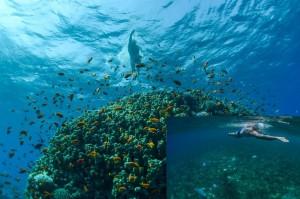 Lewis Pugh 7 Swims7 Seas for MAPs